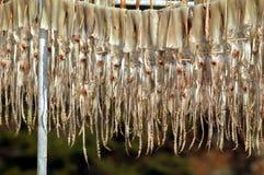 Calamar colgado hacia fuera para secarse Imágenes de archivo libres de regalías
