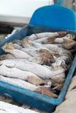Calamar congelado para el cebo de pesca que deshiela en una bandeja con el dep bajo foto de archivo