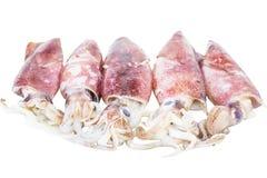 Calamar crudo VI Foto de archivo libre de regalías