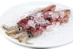 Calamar dois fresco Fotografia de Stock