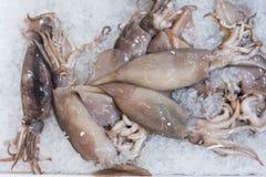 calamar en una exhibición en el hielo Alimento de mar Foto de archivo libre de regalías