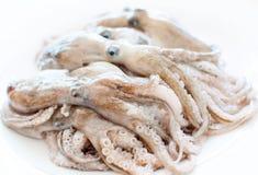 Calamar fresco Imagem de Stock