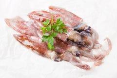 Calamar fresco Fotos de Stock Royalty Free