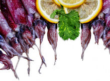 Calamar fresco Foto de archivo