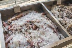 Calamar fresco del mar para la venta en la isla griega Kalymnos imagenes de archivo
