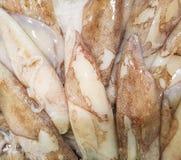 Calamar fresco en el mercado Imagen de archivo libre de regalías