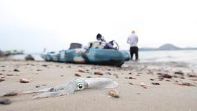 Calamar fresco en la costa después de pescar con la agua de mar metrajes
