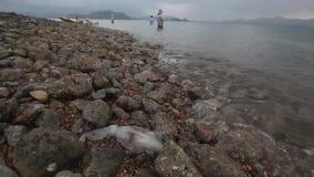 Calamar fresco en la costa después de pescar con la agua de mar almacen de metraje de vídeo