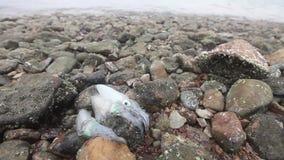 Calamar fresco na costa após a pesca com água do mar video estoque