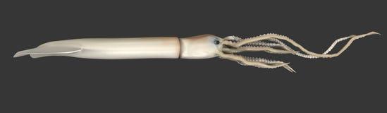 Calamar gigante (Architeuthis) stock de ilustración