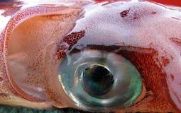 Calamar recién pescado Fotografía de archivo libre de regalías