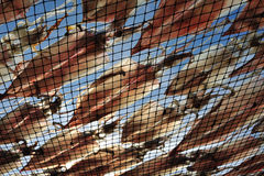 Calamar secado Fotografía de archivo