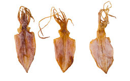 Calamar secado Imagenes de archivo
