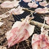 Calamar secado Foto de archivo libre de regalías