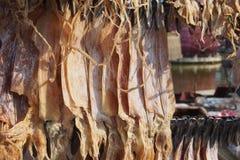 Calamar secado Imagens de Stock