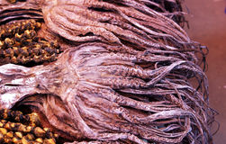 Calamar secado Foto de archivo