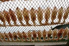Calamar secado en la red. foto de archivo