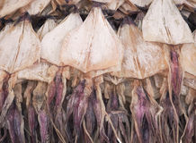 Calamar secado para el calamar asado a la parrilla Fotos de archivo