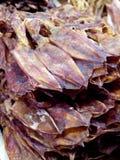 Calamar seco Foto de archivo libre de regalías