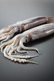 Calamares Imagens de Stock