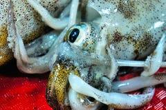 Calamares para a venda no mercado público. Imagens de Stock