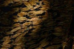 Calamares secados Fotografía de archivo