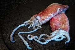 Calamares sin procesar Imágenes de archivo libres de regalías