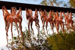 Calamari Photo stock