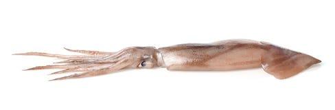 calamari lizenzfreies stockfoto