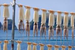 Calamari accrochant sur une ficelle, Jeju, Corée image stock