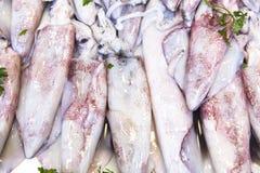 Calamari al mercato ittico Fotografia Stock