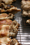 Calamari cucinato Immagini Stock