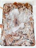 Calamari Royalty Free Stock Image