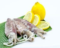 Calamari and lemon Royalty Free Stock Images