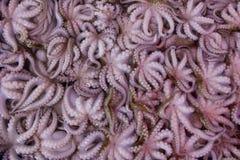 Calamari oder Kalmar auf einem lokalen Fischmarkt Stockfotografie