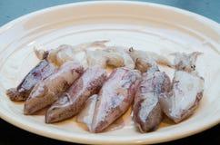 Calamaro Immagini Stock Libere da Diritti