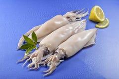 Calamaro bagnato su un fondo blu Fotografia Stock