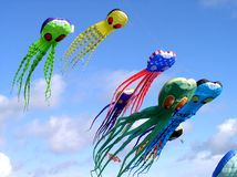 Calamaro di volo Fotografie Stock Libere da Diritti