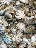Calamaro fresco immagini stock libere da diritti