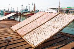 Calamaro secco Fotografia Stock Libera da Diritti