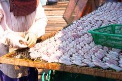 Calamaro secco Fotografia Stock