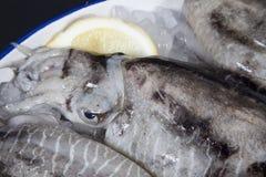 Calamaro su ghiaccio con il limone Immagini Stock