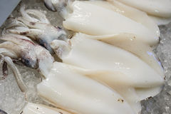 Calamary. On ice on store shelves Stock Images