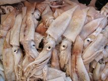 Calamary in Market. Close up of Calamary in fish market Stock Photos