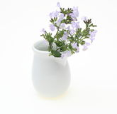 Calamint in a vase Royalty Free Stock Photography