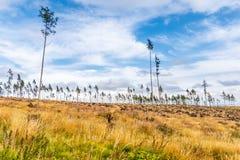 Calamité de forêt en haut parc national de Tatras, Slovaquie images libres de droits