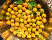 Calamondin apelsiner Arkivfoto