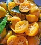 Calamondin apelsiner, når sammanpressning Fotografering för Bildbyråer