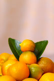 Calamondin citrus fruits Royalty Free Stock Photos