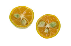 Calamondin cytrusa owoc Obrazy Royalty Free